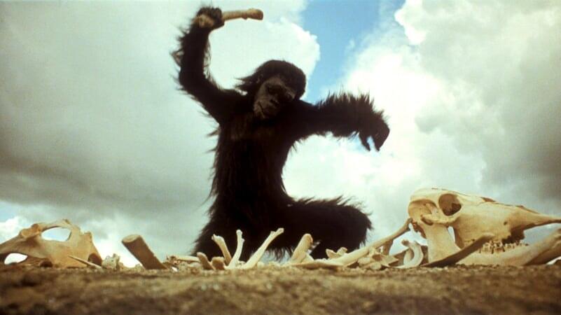 Simio golpeando con un hueso