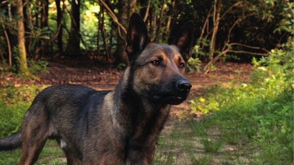 Max en el parque en Max
